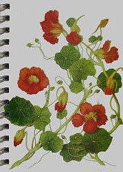 Nasturtiums Mini Journal