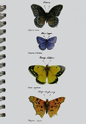 Butterflies Mini Journal