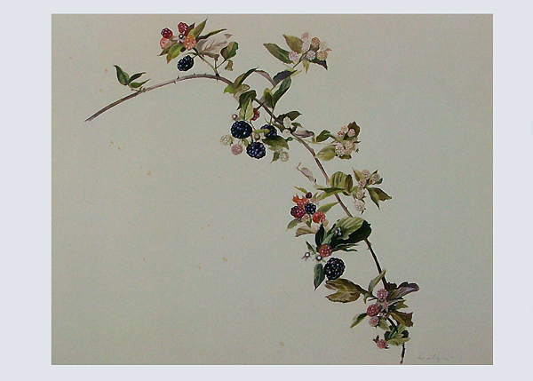 Blackberry Branch Notecard