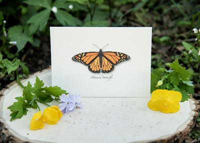Monarch Butterfly Boxed Notes,NC-105